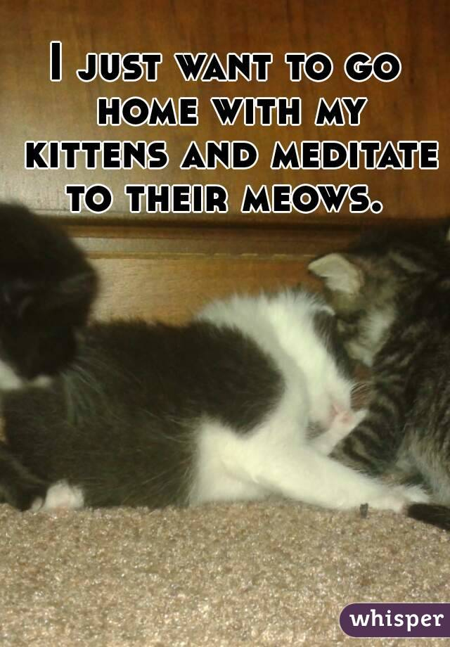 I just want to go home with my kittens and meditate to their meows.