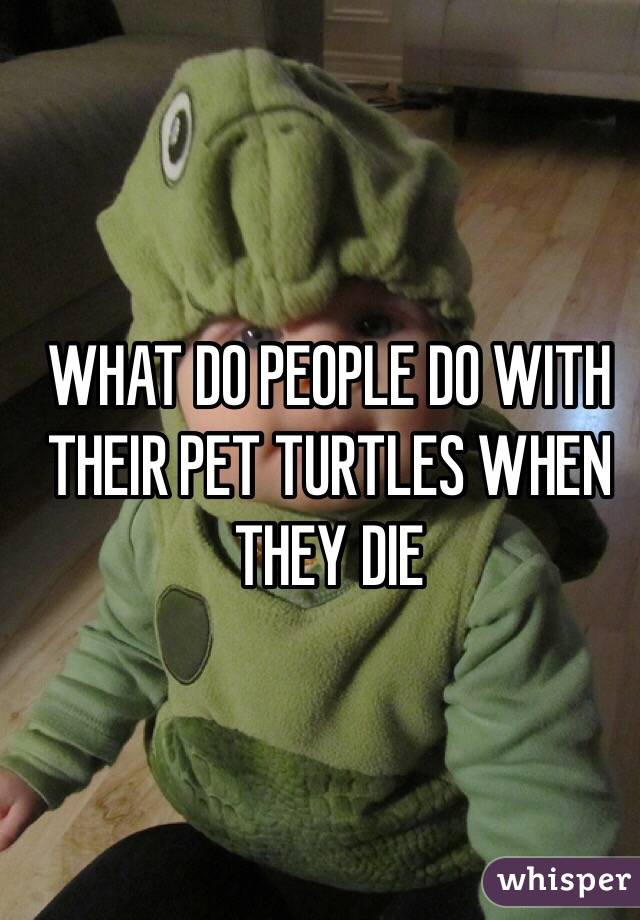 WHAT DO PEOPLE DO WITH THEIR PET TURTLES WHEN THEY DIE