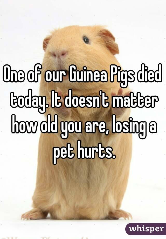 One of our Guinea Pigs died today. It doesn't matter how old you are, losing a pet hurts.