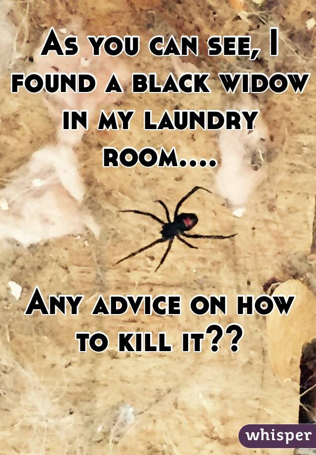 As you can see, I found a black widow in my laundry room....    Any advice on how to kill it??
