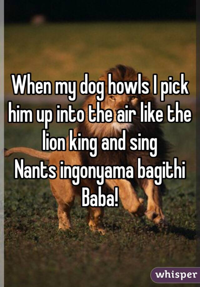 When my dog howls I pick him up into the air like the lion king and sing  Nants ingonyama bagithi Baba!