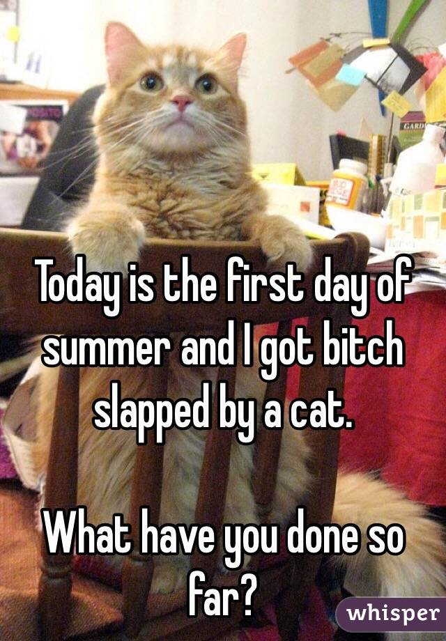 Today is the first day of summer and I got bitch slapped by a cat.  What have you done so far?
