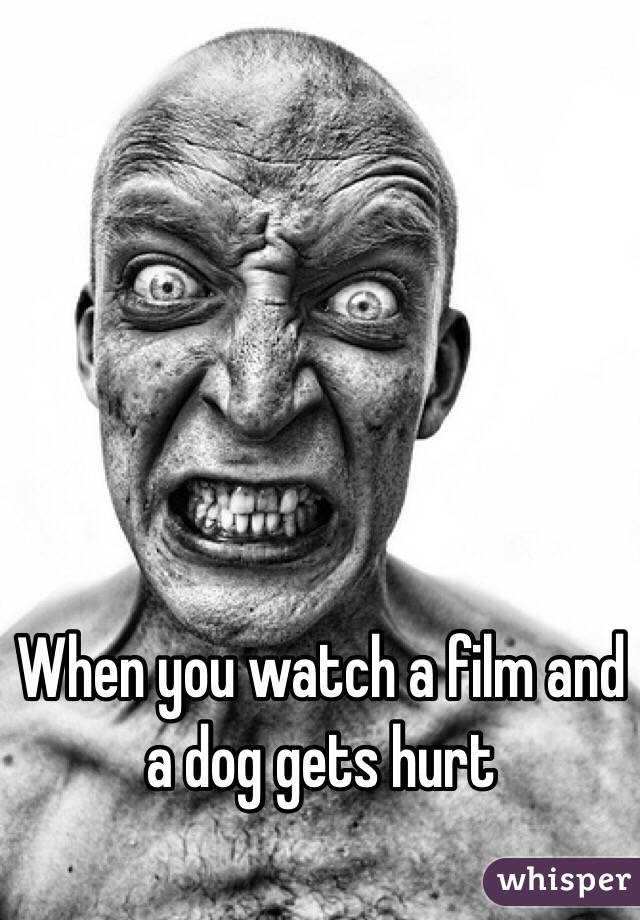 When you watch a film and a dog gets hurt
