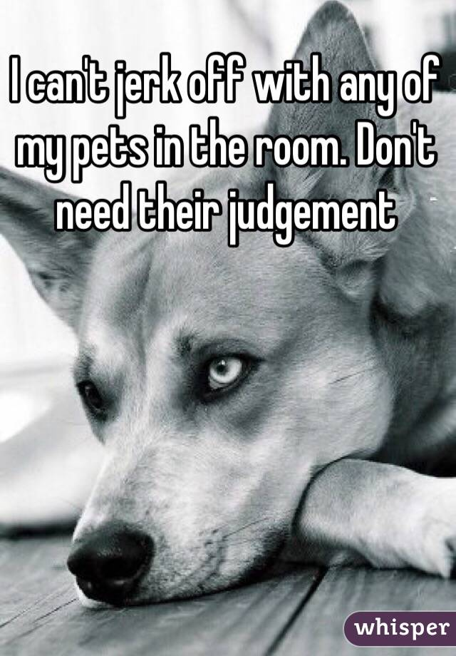 I can't jerk off with any of my pets in the room. Don't need their judgement