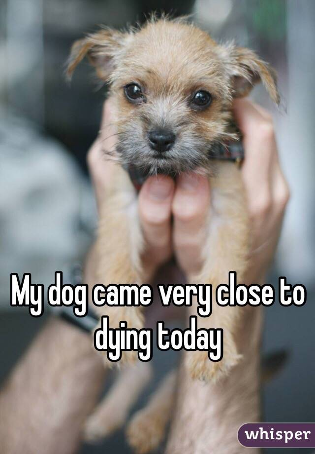 My dog came very close to dying today