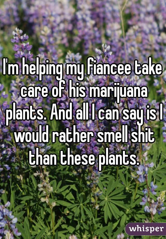 I'm helping my fiancee take care of his marijuana plants. And all I can say is I would rather smell shit than these plants.