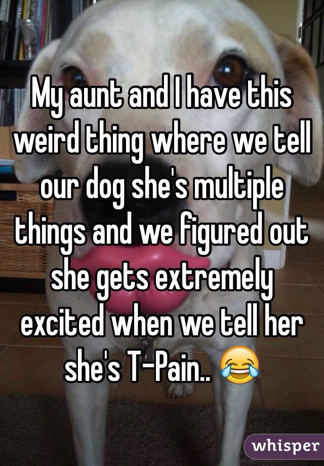 My aunt and I have this weird thing where we tell our dog she's multiple things and we figured out she gets extremely excited when we tell her she's T-Pain.. 😂