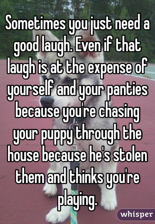 Sometimes you just need a good laugh. Even if that laugh is at the expense of yourself and your panties because you're chasing your puppy through the house because he's stolen them and thinks you're playing.
