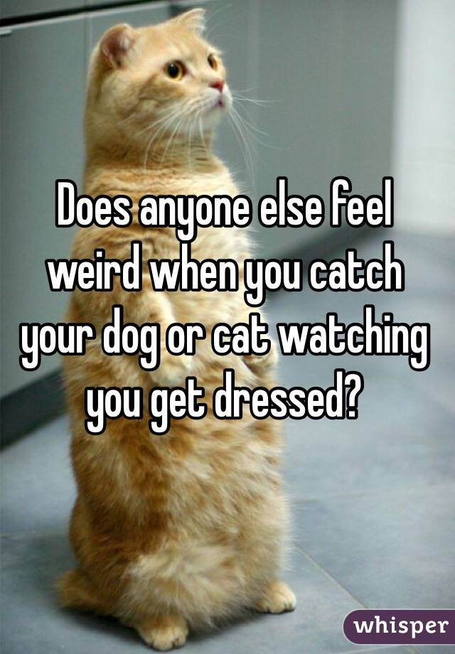 Does anyone else feel weird when you catch your dog or cat watching you get dressed?