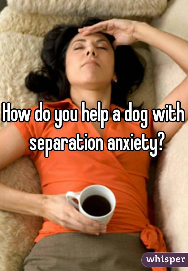 How do you help a dog with  separation anxiety?