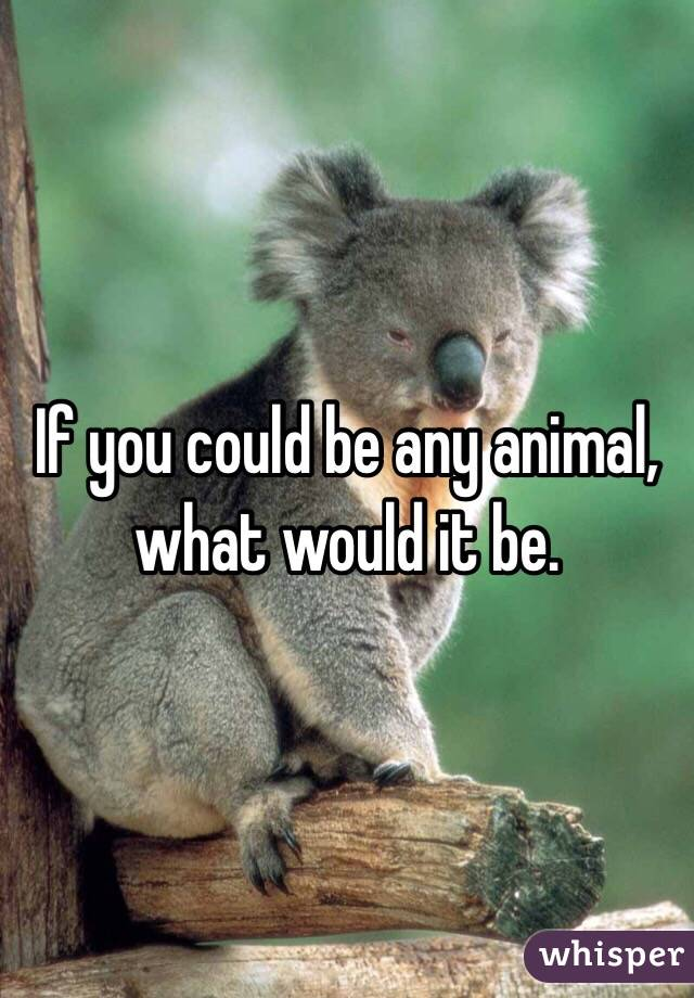 If you could be any animal, what would it be.