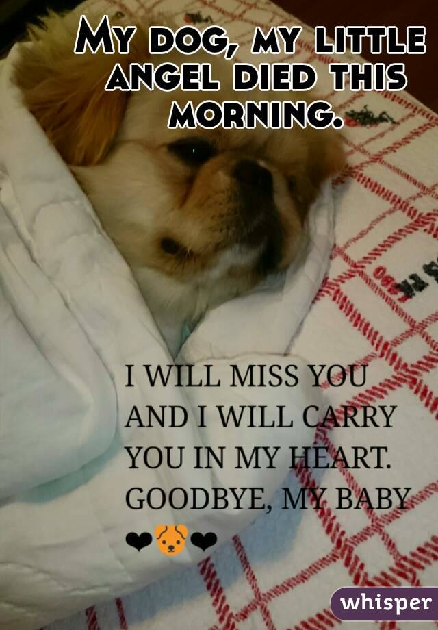 My dog, my little angel died this morning.