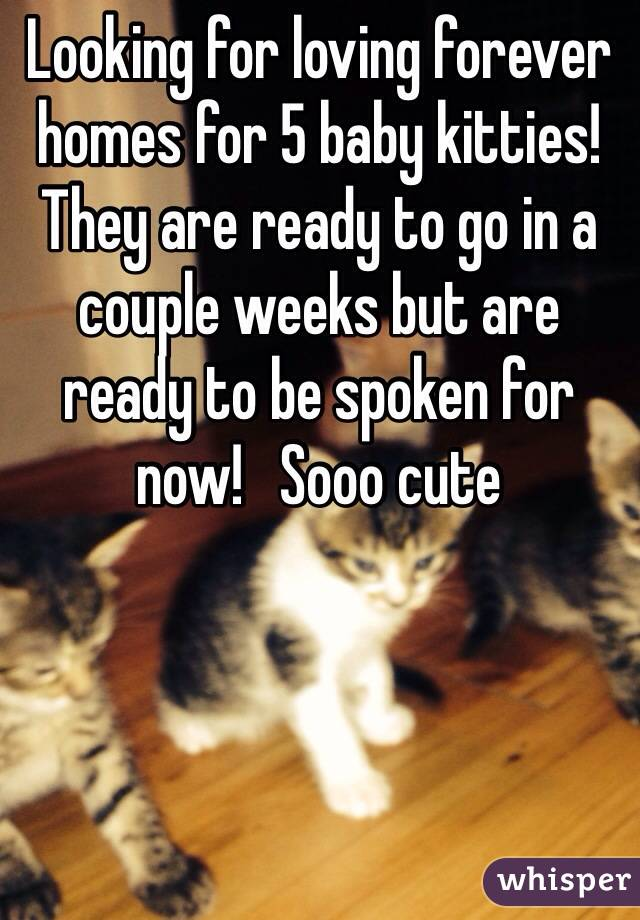 Looking for loving forever homes for 5 baby kitties!  They are ready to go in a couple weeks but are ready to be spoken for now!   Sooo cute
