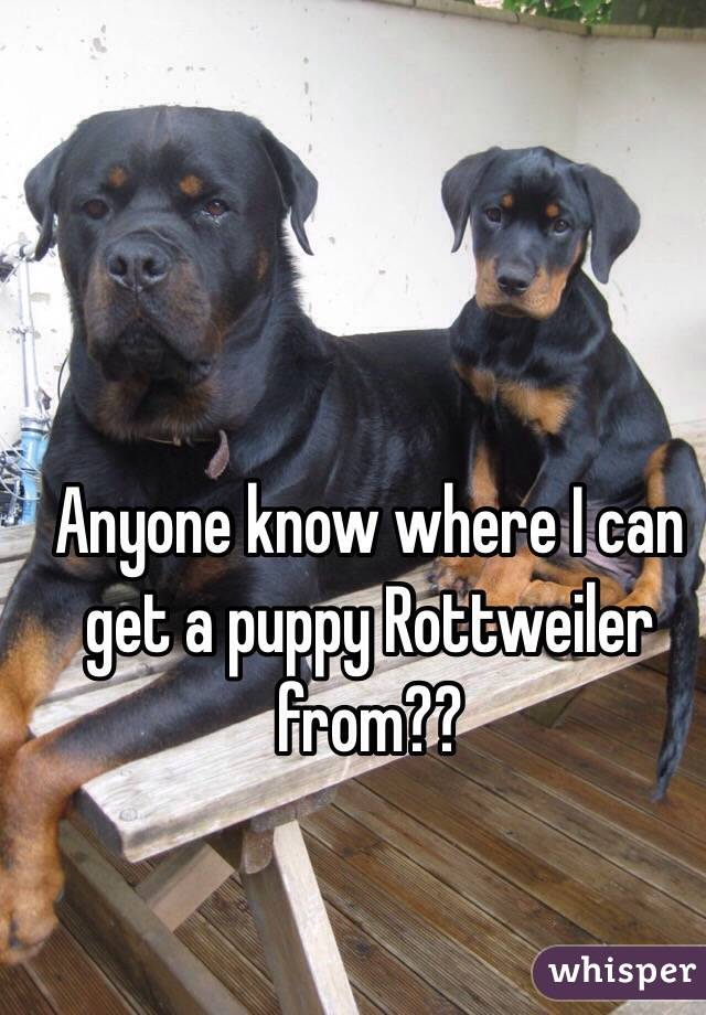 Anyone know where I can get a puppy Rottweiler from??