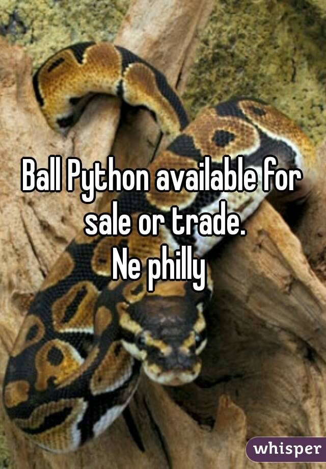 Ball Python available for sale or trade. Ne philly
