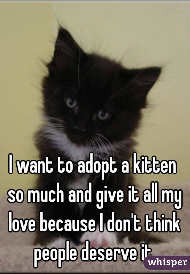 I want to adopt a kitten so much and give it all my love because I don't think people deserve it.