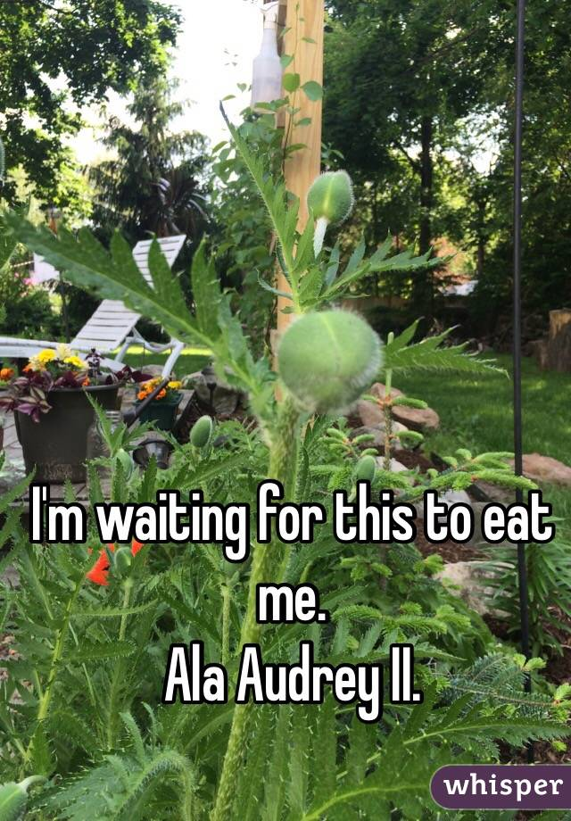 I'm waiting for this to eat me.  Ala Audrey II.