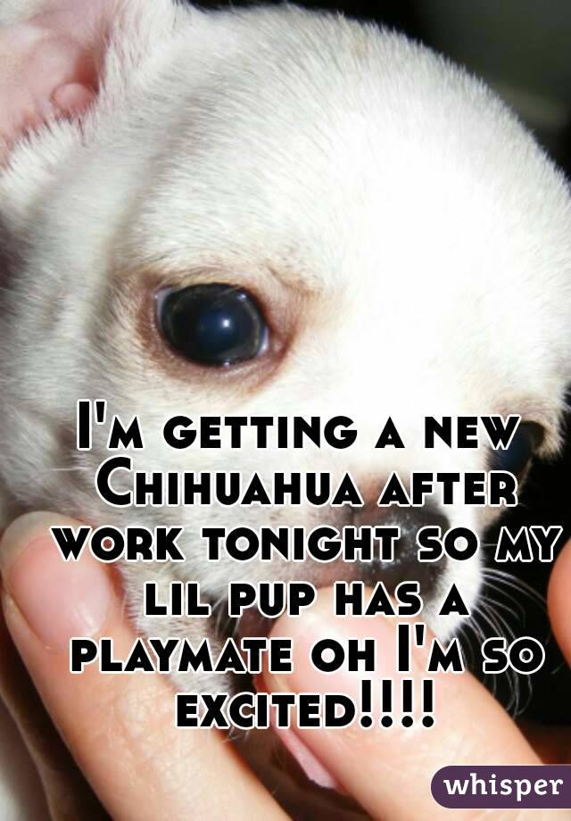 I'm getting a new Chihuahua after work tonight so my lil pup has a playmate oh I'm so excited!!!!