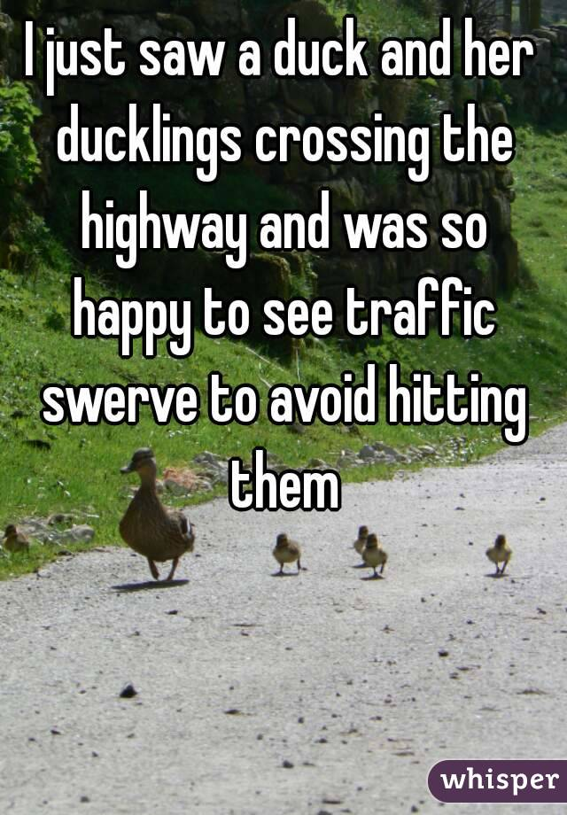 I just saw a duck and her ducklings crossing the highway and was so happy to see traffic swerve to avoid hitting them