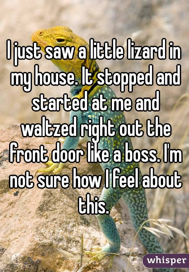 I just saw a little lizard in my house. It stopped and started at me and waltzed right out the front door like a boss. I'm not sure how I feel about this.