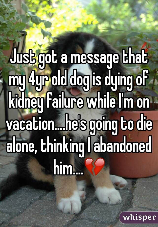 Just got a message that my 4yr old dog is dying of kidney failure while I'm on vacation....he's going to die alone, thinking I abandoned him....💔