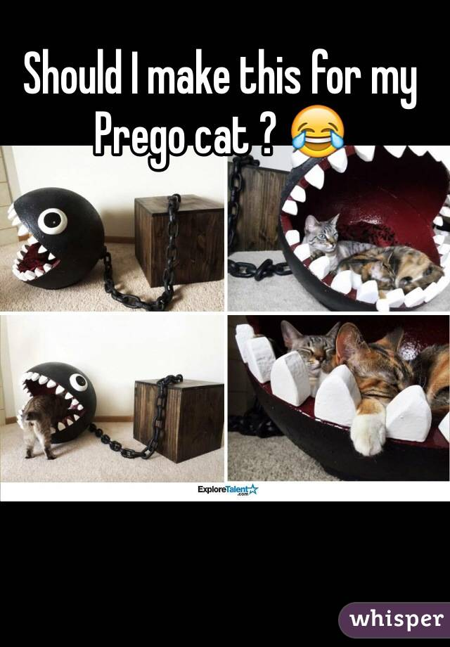 Should I make this for my Prego cat ? 😂