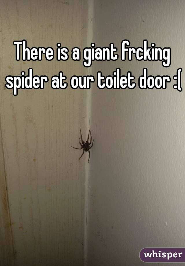 There is a giant frcking spider at our toilet door :(