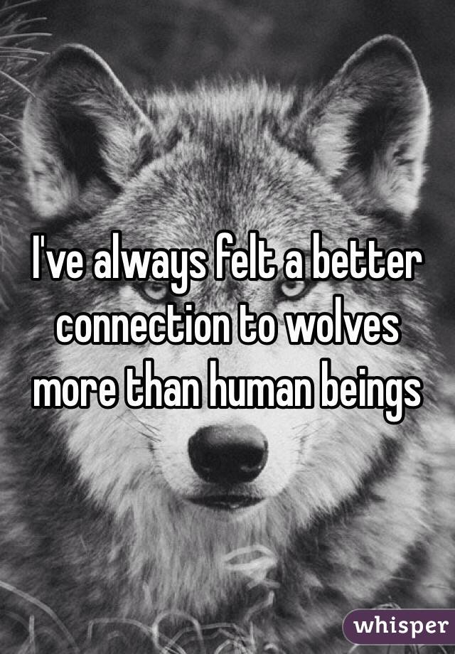 I've always felt a better connection to wolves more than human beings
