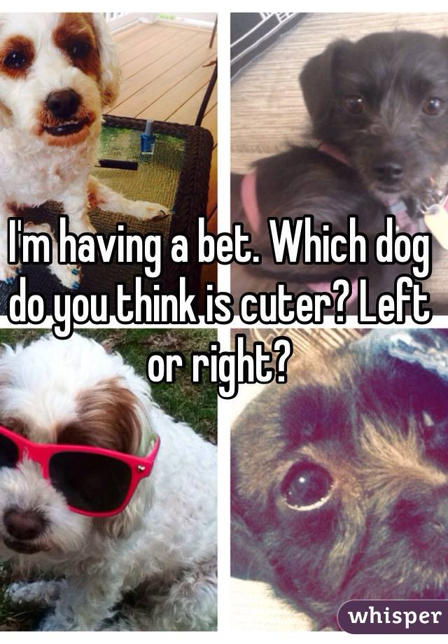 I'm having a bet. Which dog do you think is cuter? Left or right?