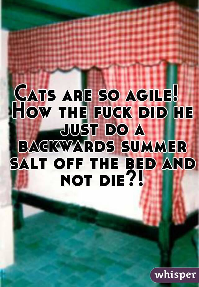 Cats are so agile!  How the fuck did he just do a backwards summer salt off the bed and not die?!