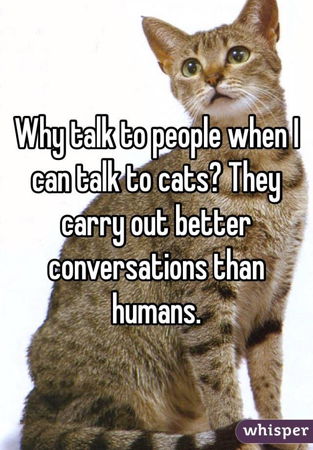 Why talk to people when I can talk to cats? They carry out better conversations than humans.