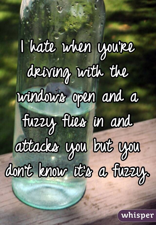 I hate when you're driving with the windows open and a fuzzy flies in and attacks you but you don't know it's a fuzzy.