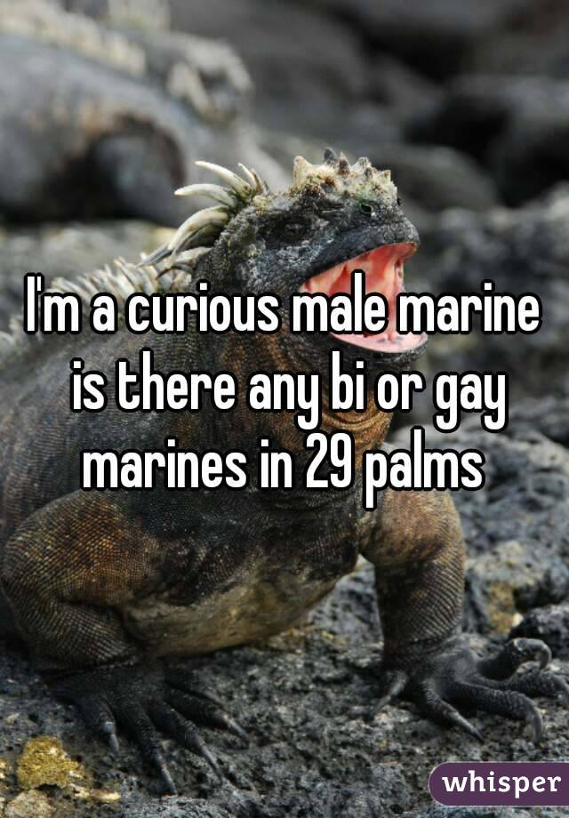 I'm a curious male marine is there any bi or gay marines in 29 palms