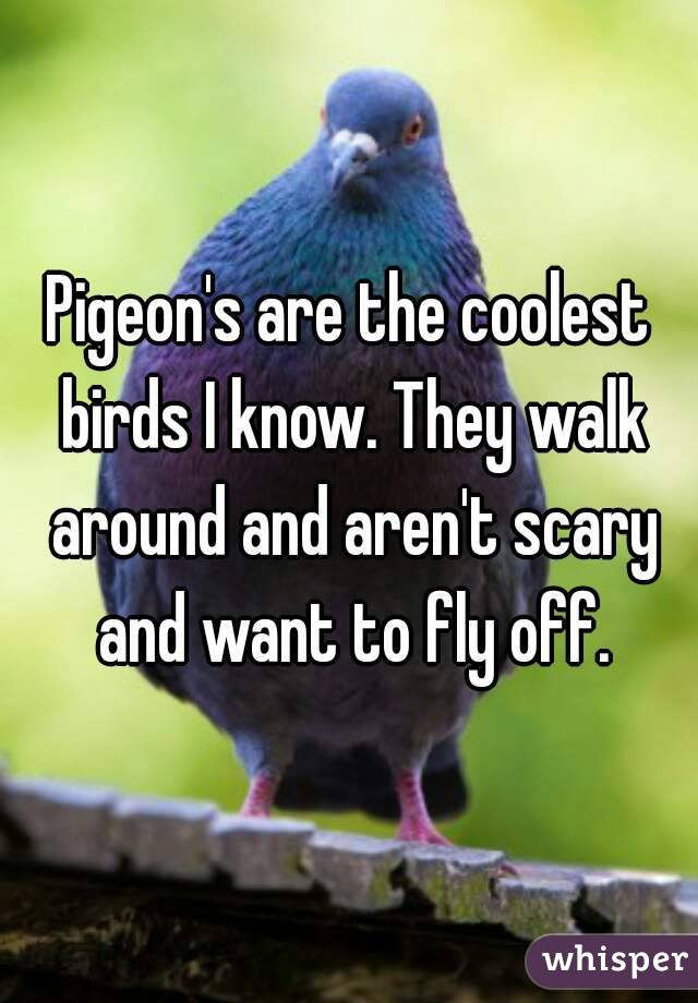 Pigeon's are the coolest birds I know. They walk around and aren't scary and want to fly off.