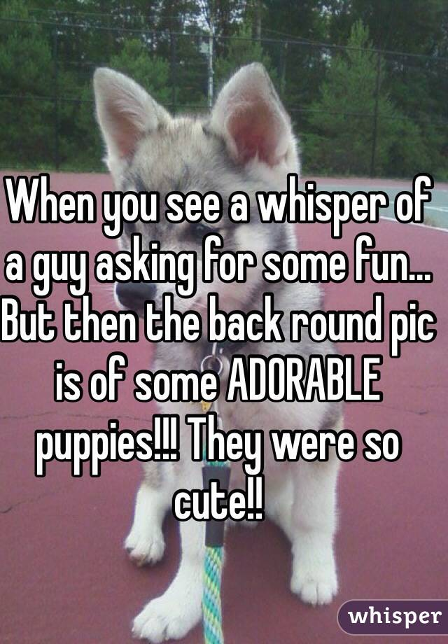 When you see a whisper of a guy asking for some fun... But then the back round pic is of some ADORABLE puppies!!! They were so cute!!