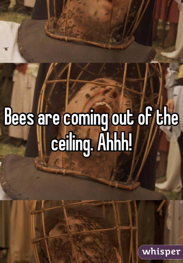 Bees are coming out of the ceiling. Ahhh!
