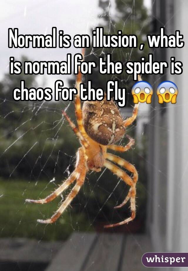 Normal is an illusion , what is normal for the spider is chaos for the fly 😱😱