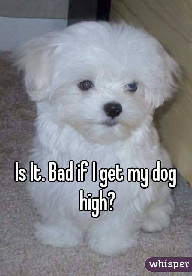Is It. Bad if I get my dog high?