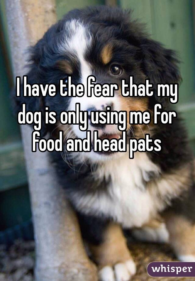 I have the fear that my dog is only using me for food and head pats