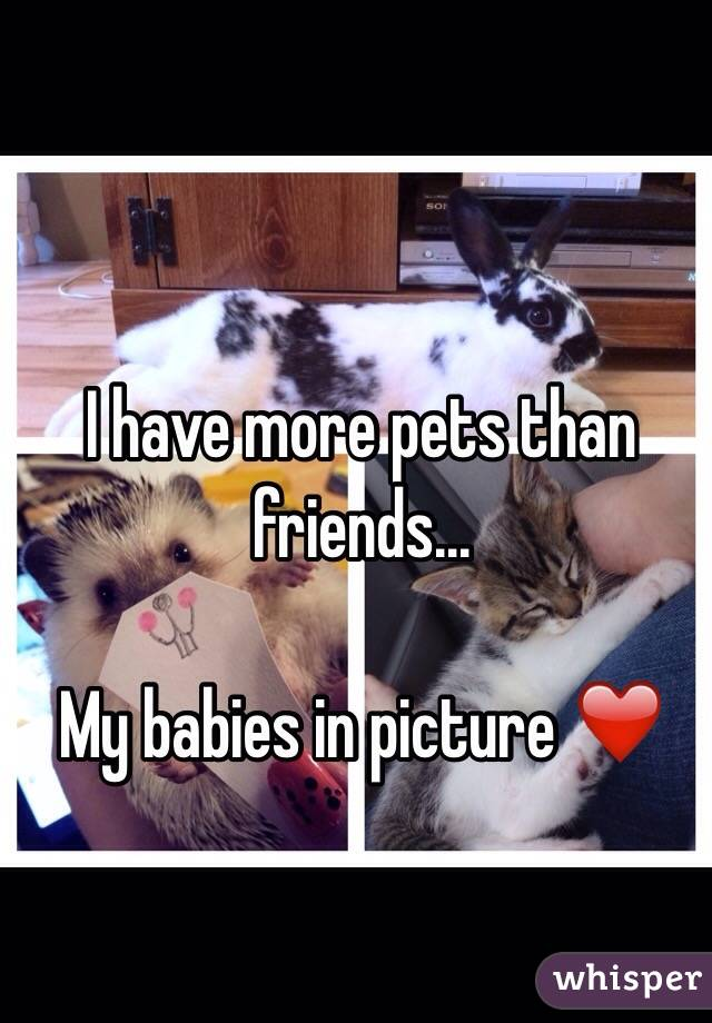 I have more pets than friends...  My babies in picture ❤️