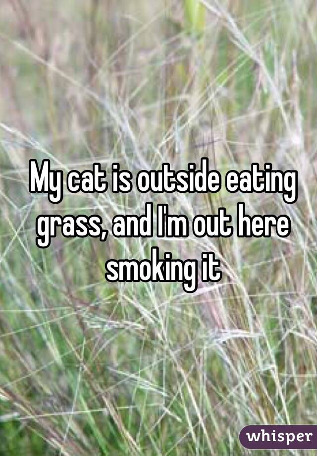 My cat is outside eating grass, and I'm out here smoking it