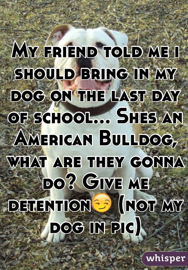 My friend told me i should bring in my dog on the last day of school... Shes an American Bulldog, what are they gonna do? Give me detention😏 (not my dog in pic)