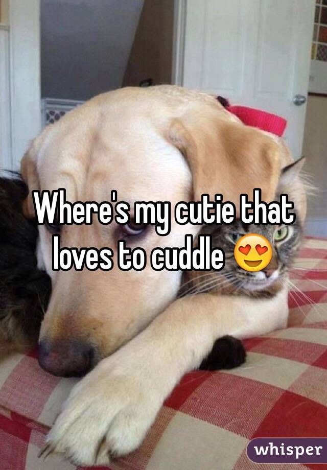 Where's my cutie that loves to cuddle 😍