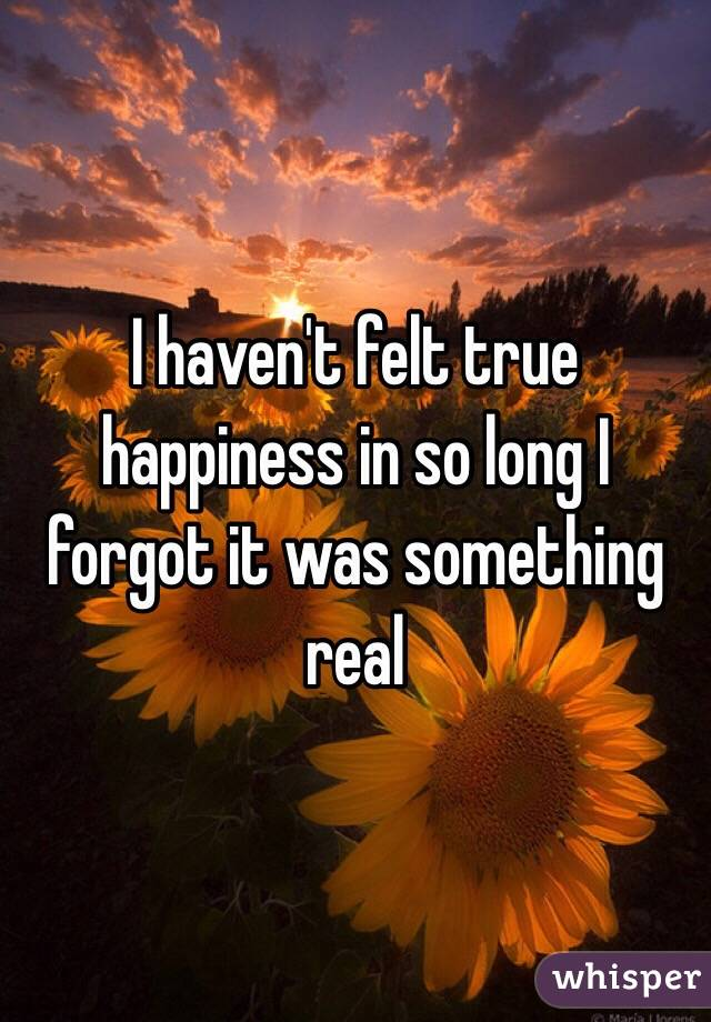 I haven't felt true happiness in so long I forgot it was something real