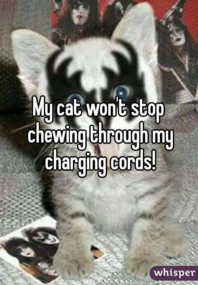 My cat won't stop chewing through my charging cords!