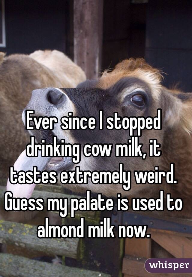 Ever since I stopped drinking cow milk, it tastes extremely weird.  Guess my palate is used to almond milk now.