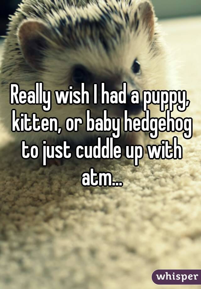 Really wish I had a puppy, kitten, or baby hedgehog to just cuddle up with atm...