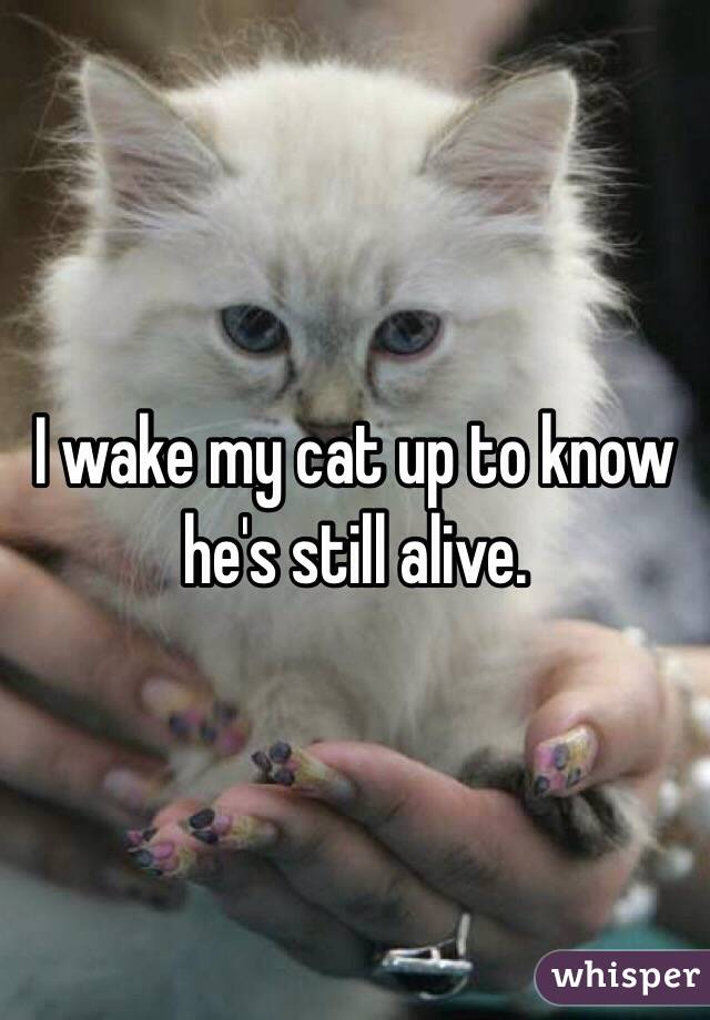 I wake my cat up to know he's still alive.