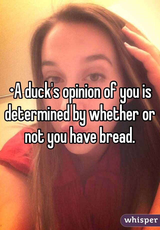 •A duck's opinion of you is determined by whether or not you have bread.