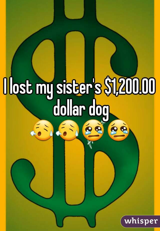 I lost my sister's $1,200.00 dollar dog 😥😥😢😢